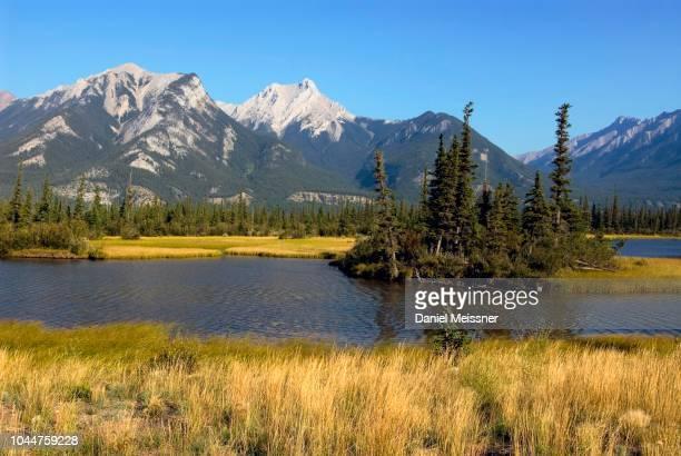 montane wetlands pocahontas ponds near athabasca river, athabasca valley, jasper national park, alberta, canada - pocahontas stock photos and pictures