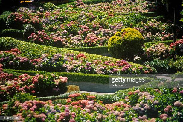 montclair gardens - montclair stockfoto's en -beelden