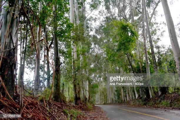 Monte Alegre do Sul