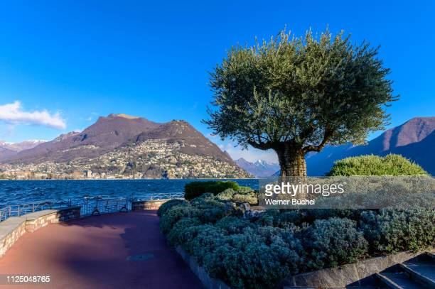 monte bre and lake of lugano - ticino canton stock pictures, royalty-free photos & images