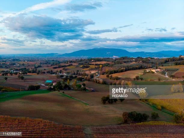 Montefalco. Vineyards at sunset. Umbria. Italy. Europe.
