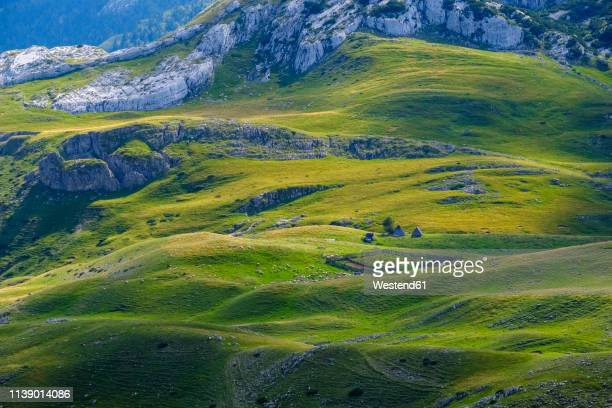 Montenegro, Durmitor National Park, flock of sheep on mountain pasture