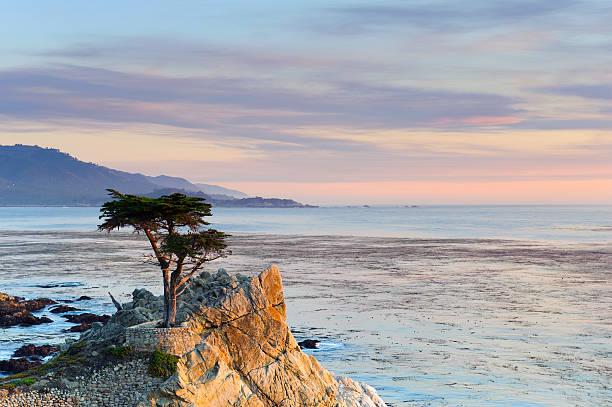 Monterey Peninsula, Lone Cypress