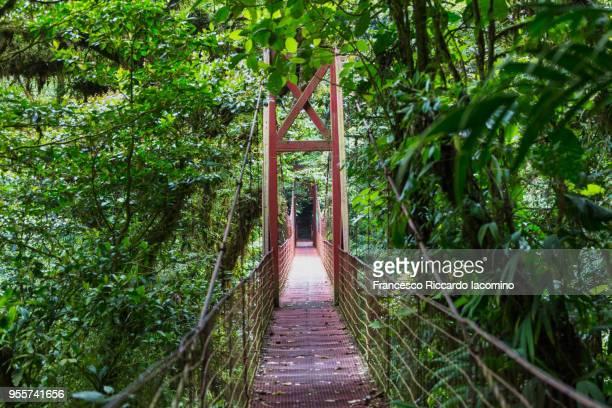 monteverde bridge on cloud forest, costa rica - iacomino costa rica foto e immagini stock
