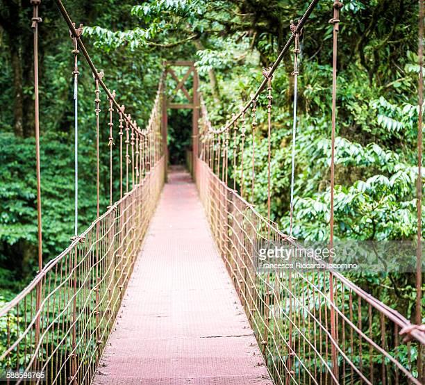 monteverde, hanging bridge in costa rica - iacomino costa rica foto e immagini stock