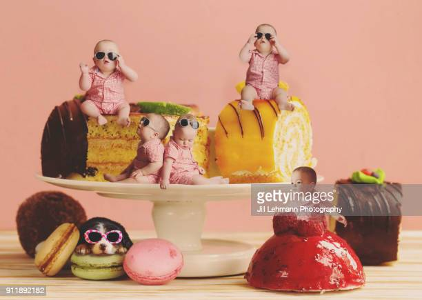 13 month old fraternal twins are composited on cakes and plate with a bernese mountain dog puppy in glasses - comedian stock pictures, royalty-free photos & images