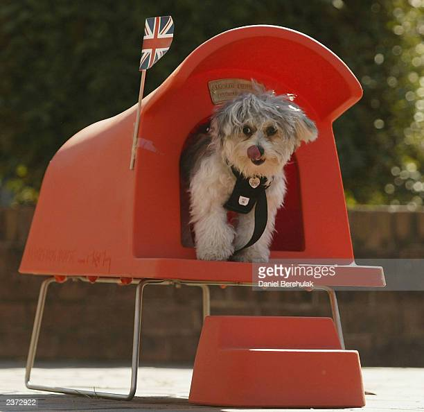 12 month old maltese cross jack russell called Moo jumps out of an ultra chic dog house designed by Michael Young during the preview of the Great...