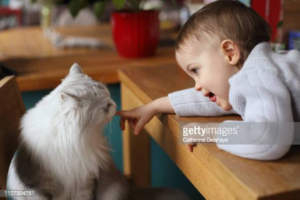 A 18 months old baby boy with his cat at home