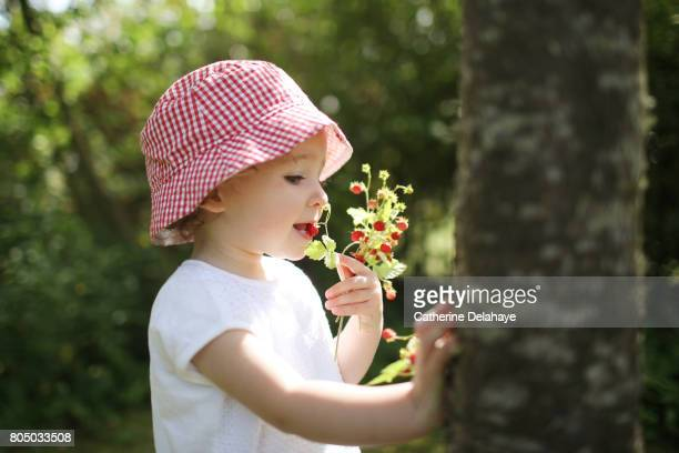 A 18 months old girl eating strawberries in a garden