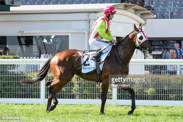 Montoya's Secret ridden by Luke Currie heads to the barrier before the mypuntercom Bellmaine Stakes at Caulfield Racecourse on February 10 2018 in...