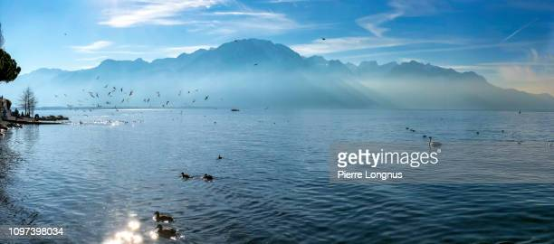 montreux shore of lake geneva in winter, - vaud canton stock pictures, royalty-free photos & images