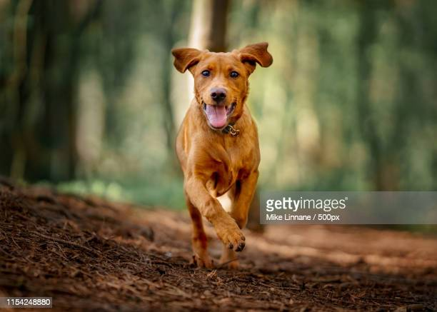 monty - dog stock pictures, royalty-free photos & images