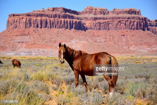 monument valley - altiplano stock pictures, royalty-free photos & images