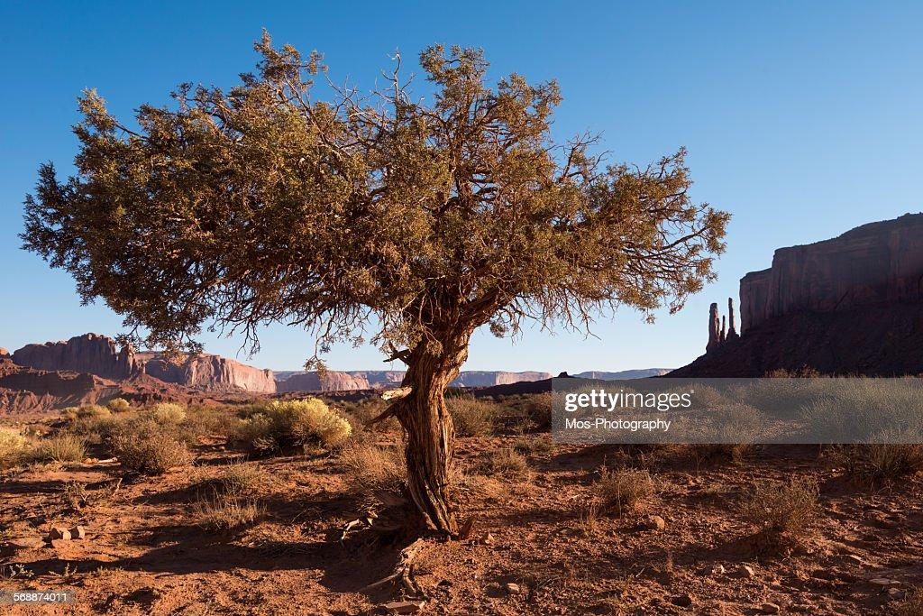 Monument valley : Stock Photo
