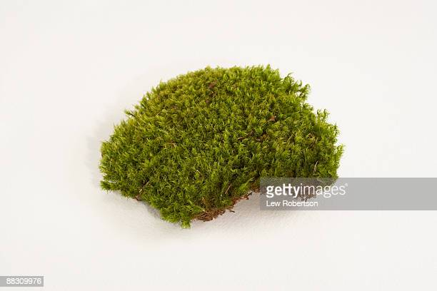 mood moss - moss stock pictures, royalty-free photos & images