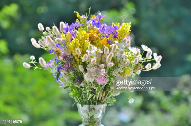 mood - delphinium stock pictures, royalty-free photos & images