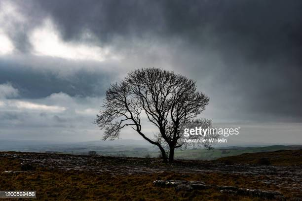 moody clouds and lone tree - limestone pavement stockfoto's en -beelden