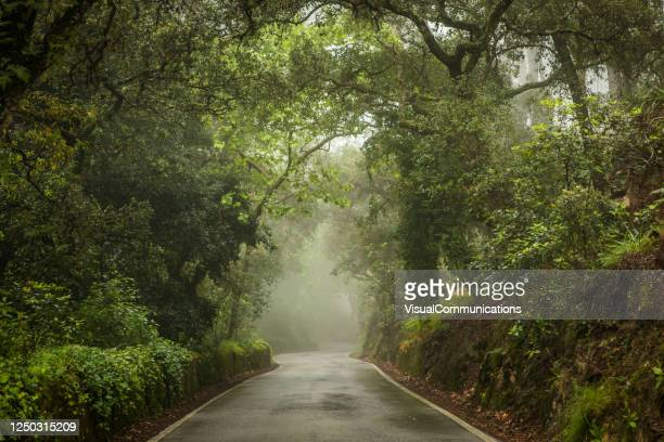 moody day in forest. - forest road stock pictures, royalty-free photos & images