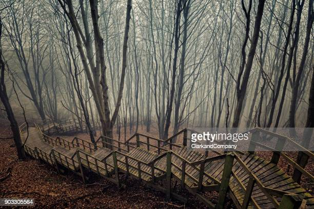moody niebla rodeada de árboles en dinamarca de møns klint - selandia fotografías e imágenes de stock