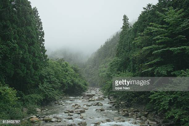 moody forest and stream in mountains, japan - ippei naoi stock photos and pictures