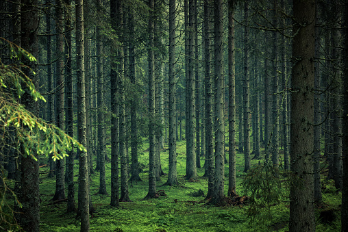 Moody image of magical forest in Slovenia 970163108