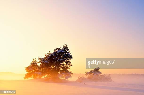 Moody Winter Landscape
