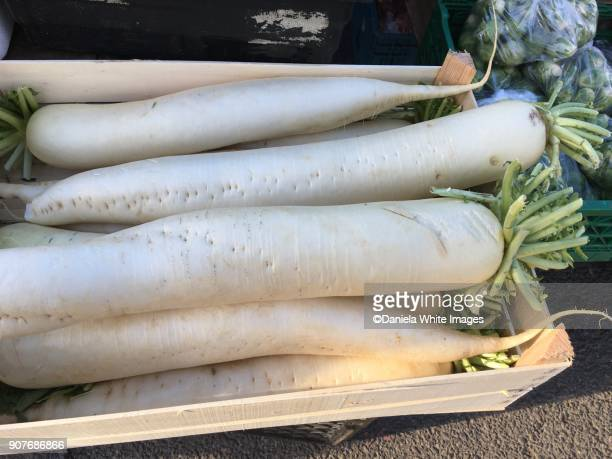 mooli -daikon -raphanus sativus - dikon radish stock photos and pictures
