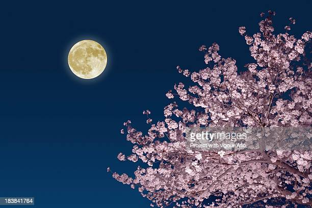 moon and cherry blossoms - flower moon stock pictures, royalty-free photos & images