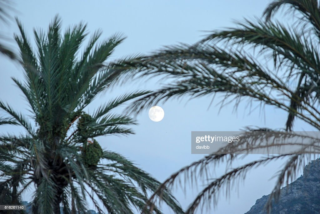 Moon and tree palms : Foto de stock