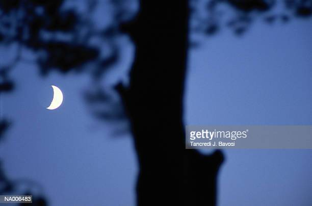 moon and tree silhouette - bavosi stock photos and pictures