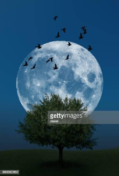 月の草の丘の上に一本の木の上を飛んで鳥の後ろに - 縦位置 ストックフォトと画像