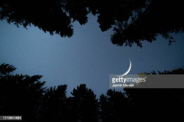 moon crescent between forest trees in calm night - midnight stock pictures, royalty-free photos & images