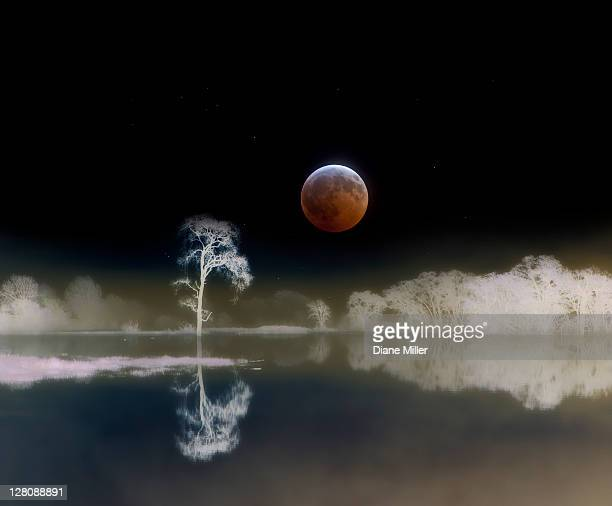 Moon from total lunar eclipse composited with trees reflected in water with colors inverted for 'negaive' effect, Laguna de Santa Rosa, California, USA