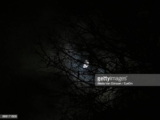Moon Glowing Behind Branches