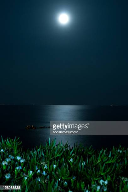 Moon Light Carpet With Flowers