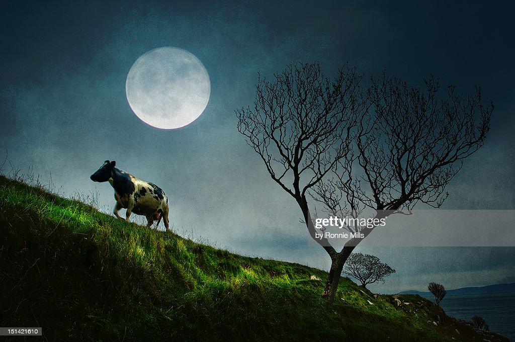 Moon light : Stockfoto