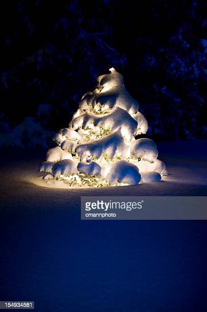 moon lit christmas tree - cmannphoto stock pictures, royalty-free photos & images