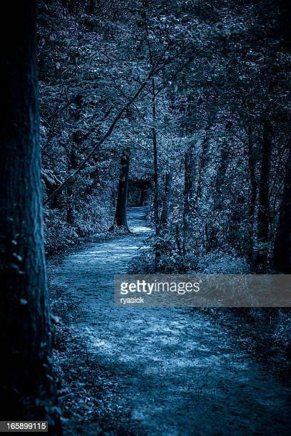 Moon Lit Path In Forest At Night