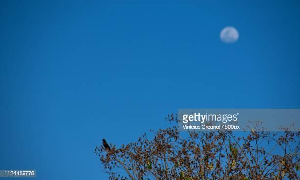 moon on night sky - gregnol fotografías e imágenes de stock