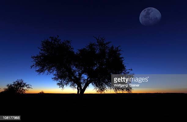 Moon plus de mashatu