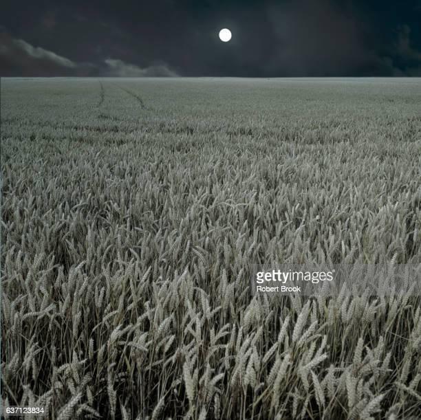 Moon over prairie