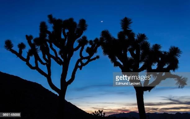 Moon over the Desert, Joshua Tree National Park, California