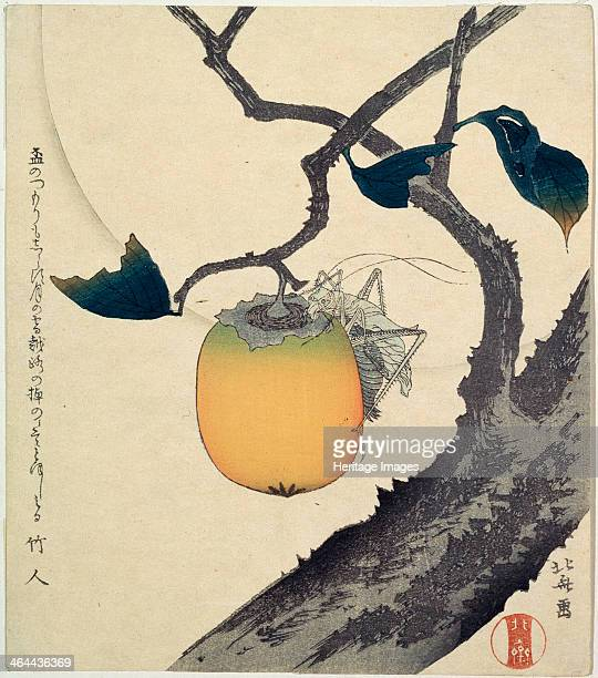 'Moon Persimmon and Grasshopper' 1807 Hokusai Katsushika Found in the collection of the State A Pushkin Museum of Fine Arts Moscow