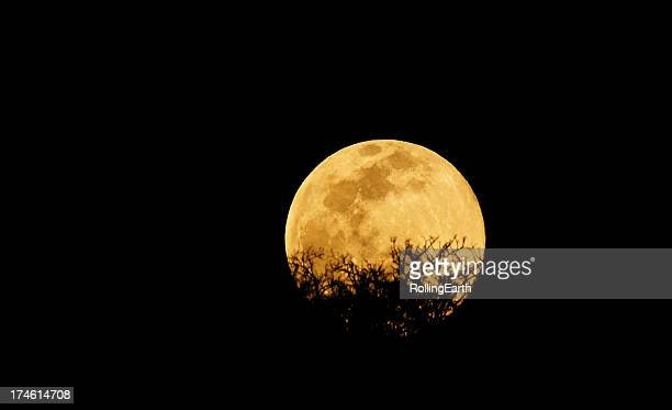 moon rise - harvest moon stock pictures, royalty-free photos & images