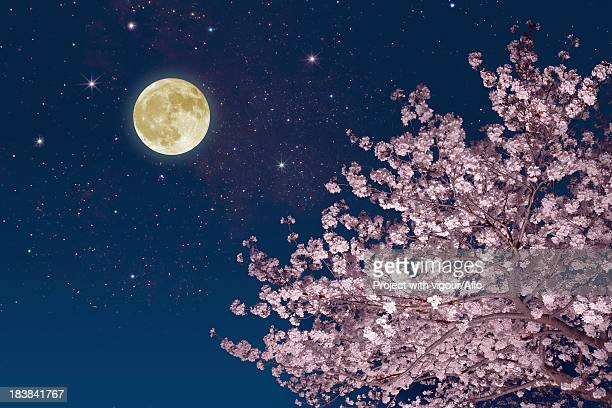 moon stars and cherry blossoms - pink moon stock pictures, royalty-free photos & images