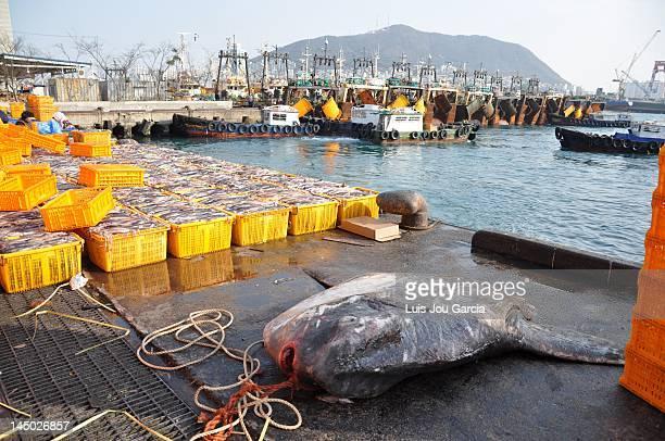 Moonfish in fish market