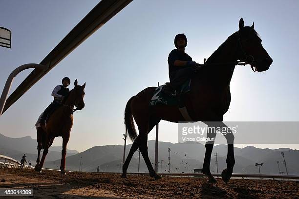 Moonlight Cloud and Feuerblitz after galloping on the All Weather Track during a Hong Kong International Trackwork Session at Sha Tin racecourse on...