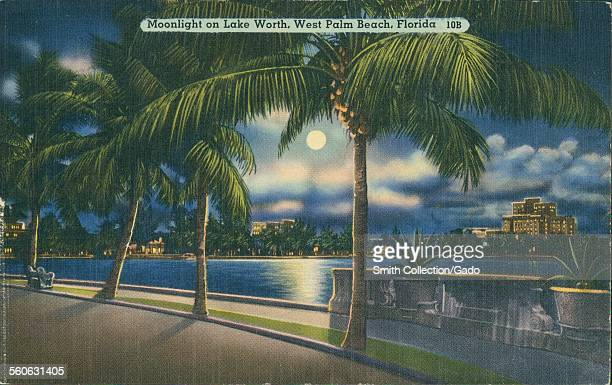 Moonlight on Lake Worth with palm trees at night West Palm Beach Florida 1905