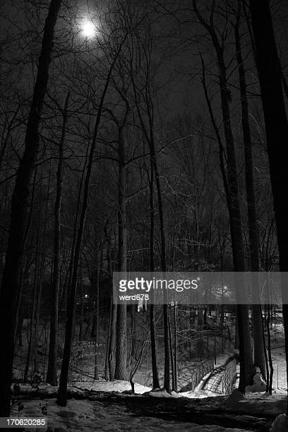 moonlit snowy night