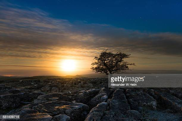 moonset and a tree - limestone pavement stockfoto's en -beelden